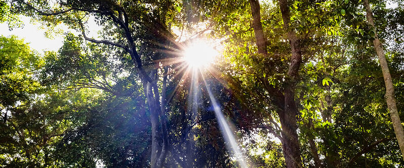 lokala-naringslivet-sol-natur-foretag-molndal-energi